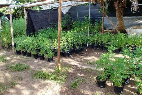 Une plantation bien organisée