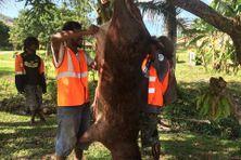 Des chasseurs à Touho. Photo d'archive