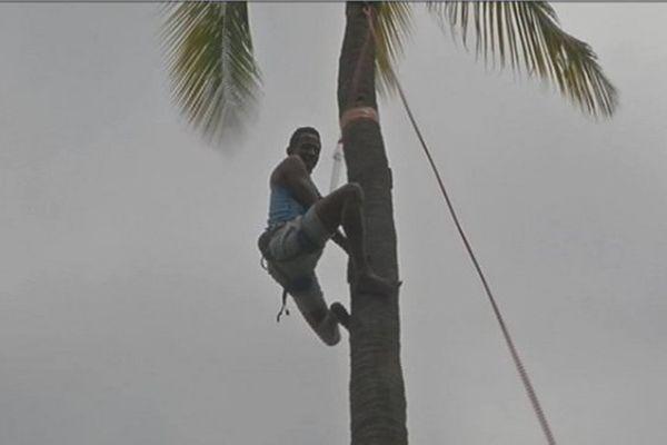 grimpeur de coco