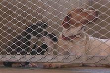 Le nombre de chiens trouvés chaque jour par la fourrière augmente de plus en plus.