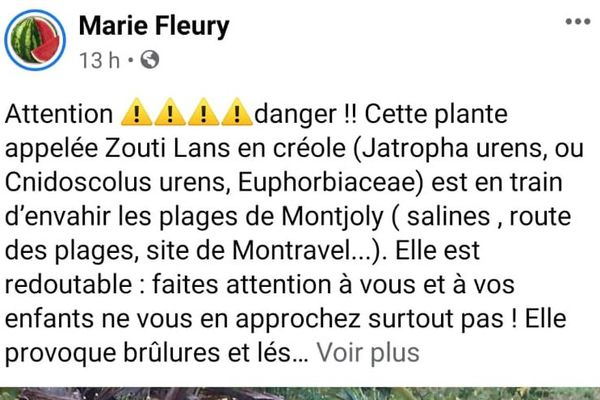 Attention ! Plante dangereuse….