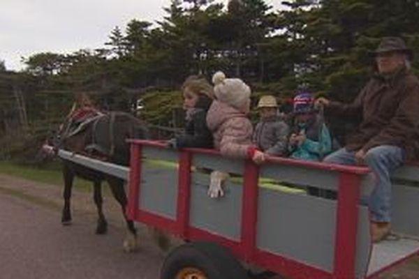 A Saint-Pierre, la tradition de la charrette à cheval relancée