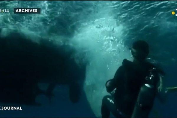 Plongée sous-marine : la sécurité avant tout