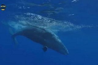 UN JOUR AVEC, les baleines
