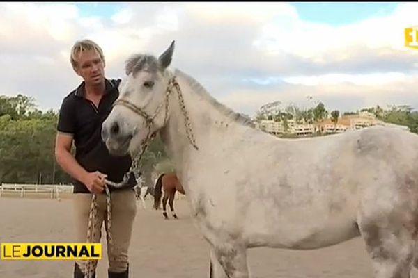 Equitation : le dressage en douceur