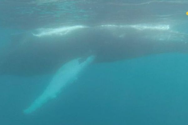 Mission scientifique mammifères marins