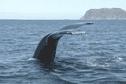 Une revue en ligne pour valoriser la biodiversité des Outre-mer, dont celle de Saint-Pierre et Miquelon