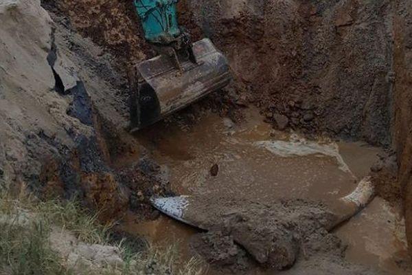 Cadavre de baleine exhumé et découpé Port Macquarie Australie 2 (25 septembre 2017)