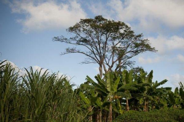 Guadeloupe : un archipel à l'agriculture singulière