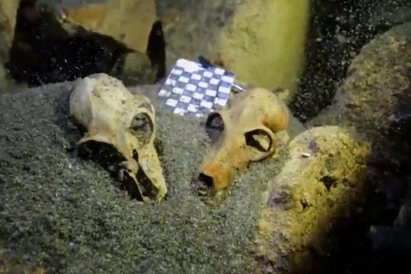 Fossiles découverts à Madagascar