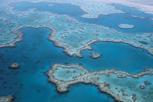 Le Nord de la grande barrioère de corail australienne est sinistré suite au phénomène El nino.