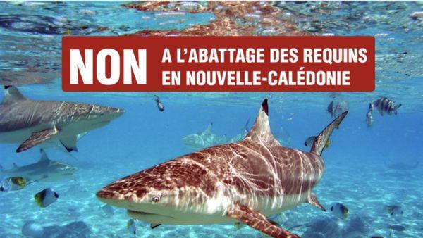 Visuel de la pétition contre l'abattage des requins