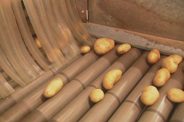 Filière pommes de terre, Ocef, décembre 2019
