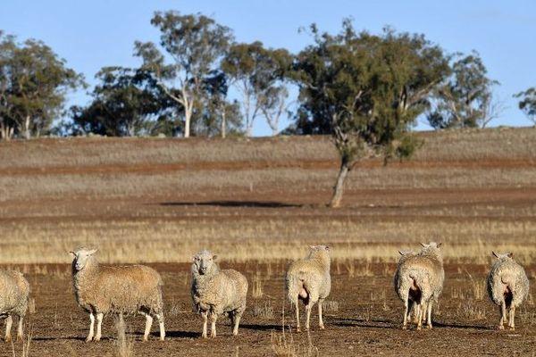 Australie sécheresse (AFP)