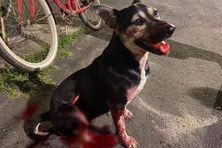 Le pauvre animal est mort chez le vétérinaire des suites de ses blessures.