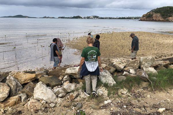 détenus camp est dans la mangrove