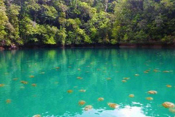lac aux méduses Palau