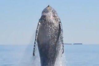 Baleine joie Californie