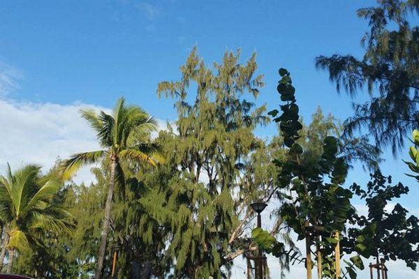 Ciel bleu dans les arbres