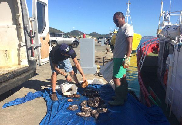 Pêcheurs de holothuries interdits de pêcher, 1er septembre 2018