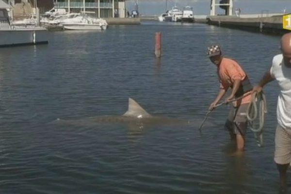Pêcheurs requins