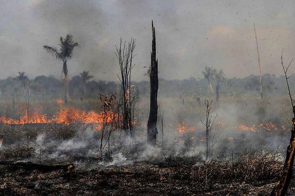 Amazonie feux