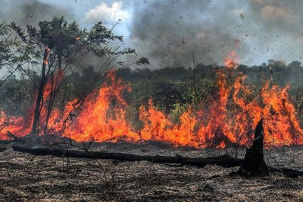 Incendie forêt Amazonie
