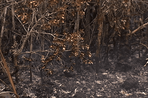 Incendies grand sud