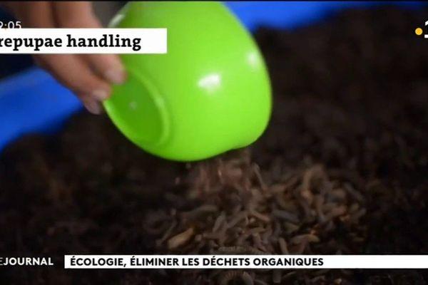 La bio conversion de déchets organiques au service de l'aquaculture