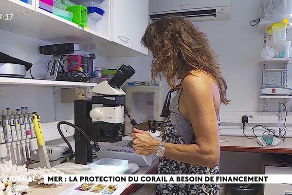 Sciences et nature au programme d'Emmanuel Macron à Moorea
