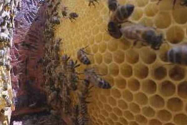 abeilles et tandacayou