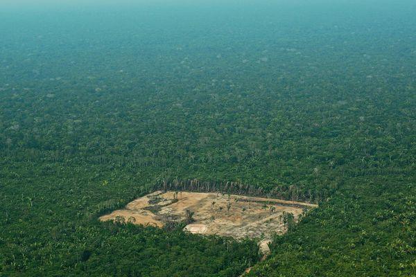 Forêt Brésil