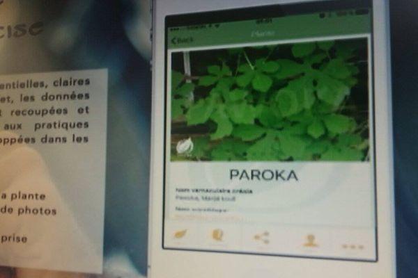 Application Pawoka