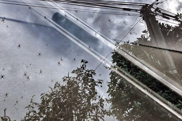 Temps gris et araignées