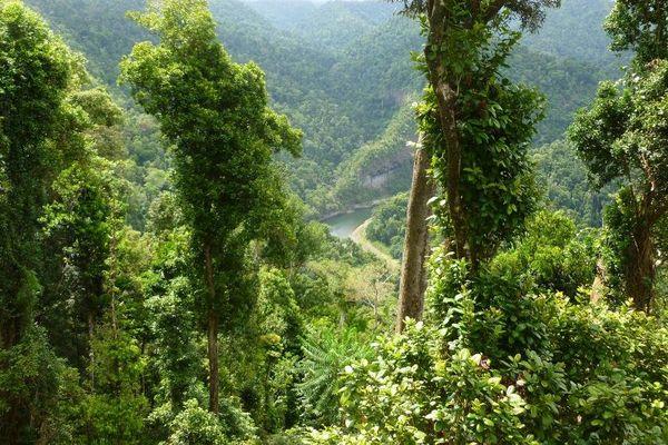 Forêt Queensland