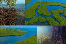 """Captures du la page """"Mangwov"""" dédiée à la mangrove de la Guadeloupe"""