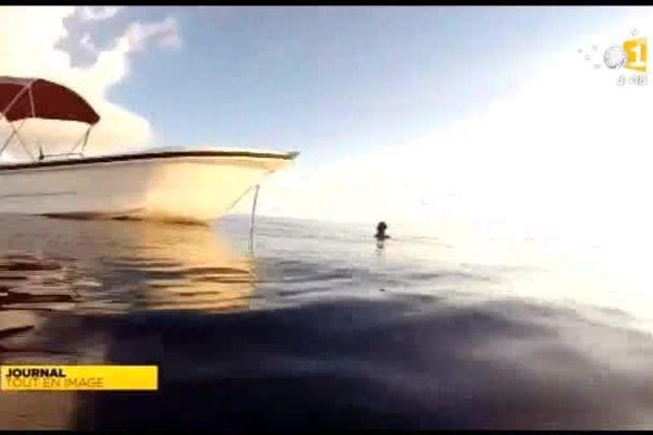 Un requin de trois mètres attaque et blesse un plongeur à Wallis