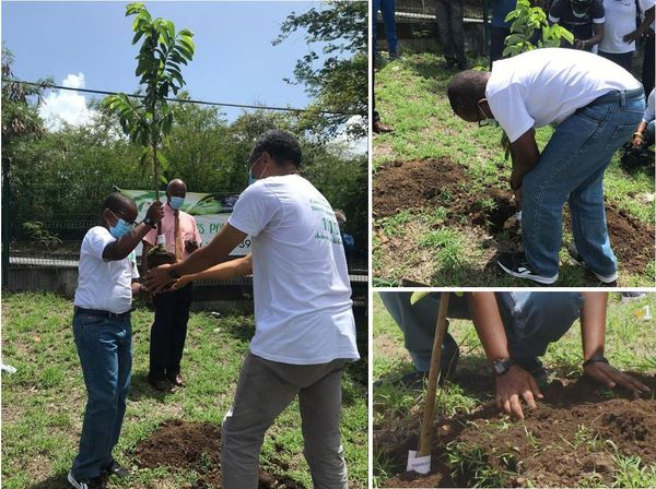 Plantation du premier arbre, dans l'enceinte du collège.