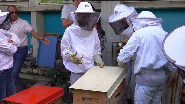 Apprentis apiculteurs lycée Leconte de Lisle
