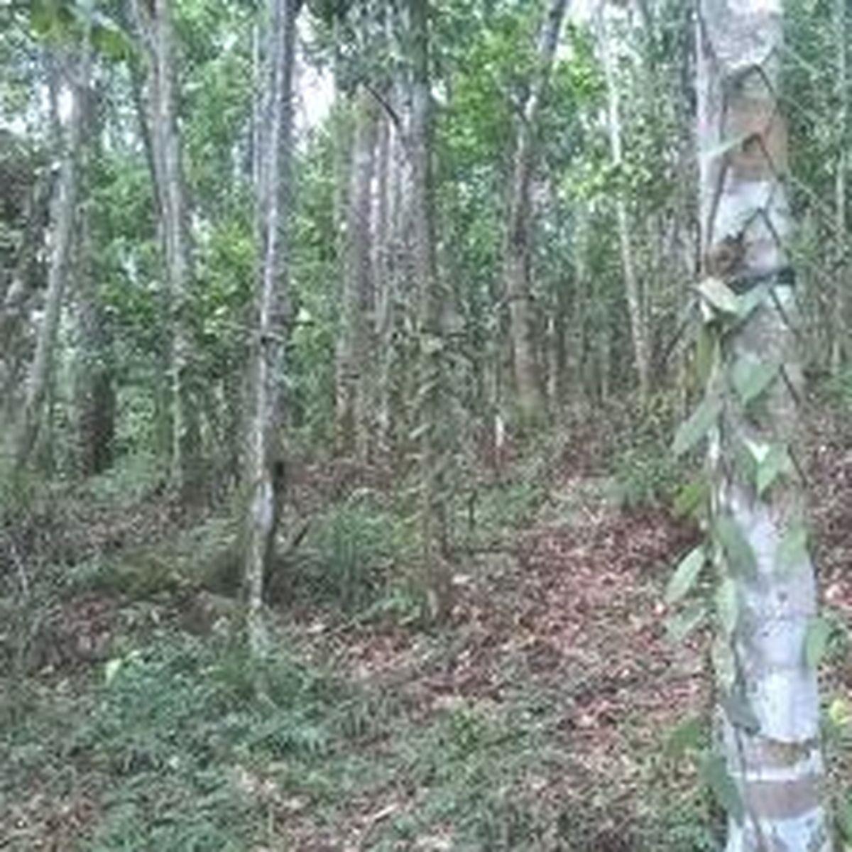 L'agroforesterie en Guadeloupe reçoit l'agrément du gouvernement