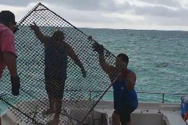 opération nettoyage parcs à poissons