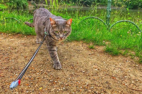 Sauvez Zadig : le chat perdu par Air Caraïbes