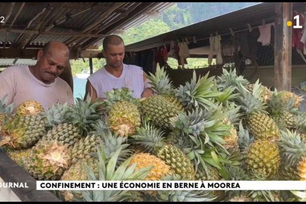 Situation économique catastrophique à Moorea