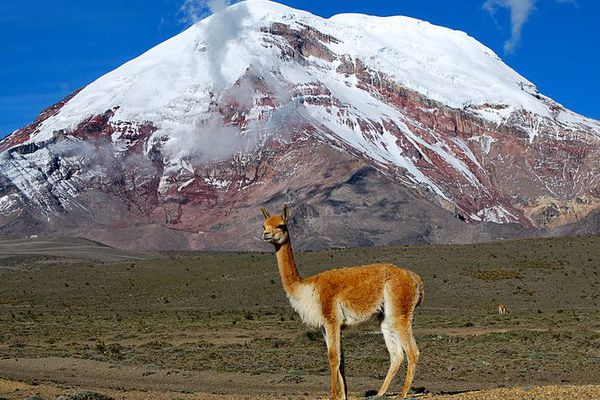 Volcan du Chimborazo en Equateur