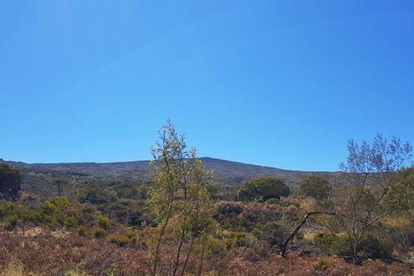 Forêt des hauts sous le vent