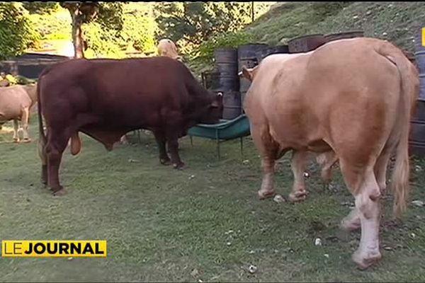 Les éleveurs de Raiatea demandent un abattoir