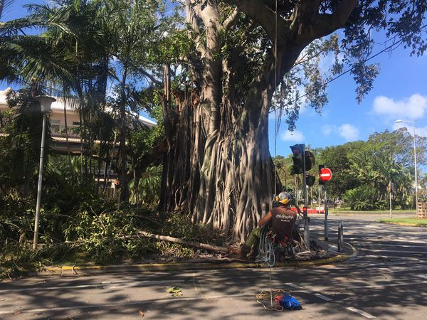 Cyclone Niran Nettoyage Nouméa banian
