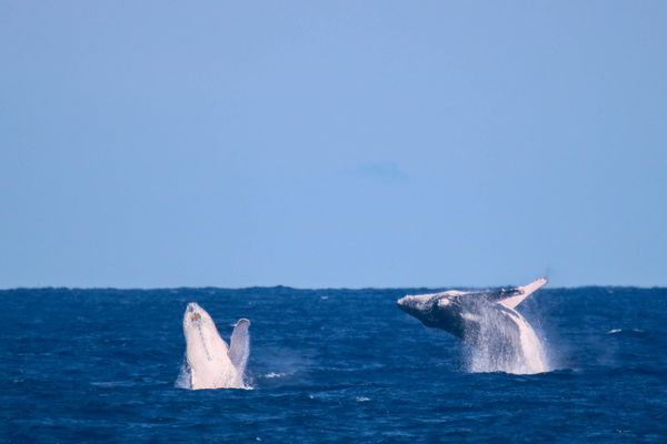 Baleines à la Pointe au sel Saint-Leu