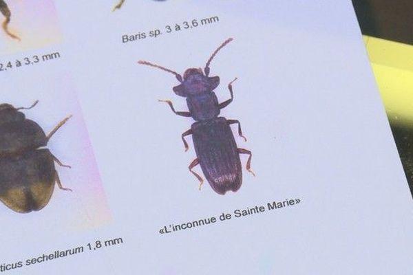 """découverte insecte """"L'inconnue de Sainte-Marie"""" 190119"""