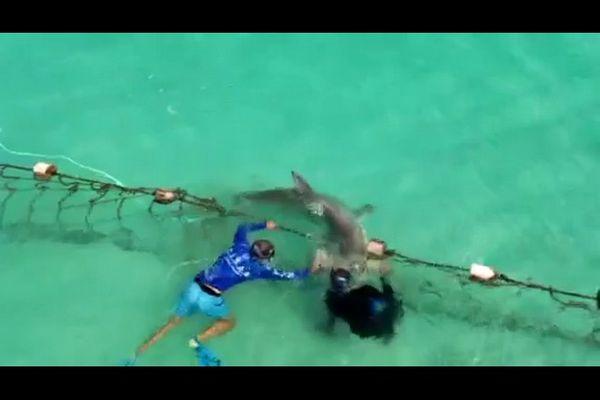 requin-marteau filet baignade roches noires saint-gilles-les-bains 220221